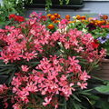 jardins fleuris 0520053