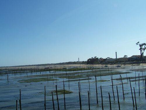 Cap-Ferret-parcs ostréïcoles