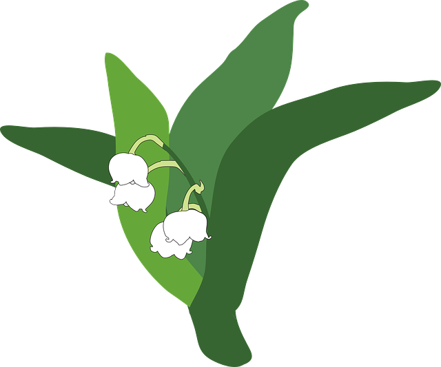 lily-of-the-valley-335215_640
