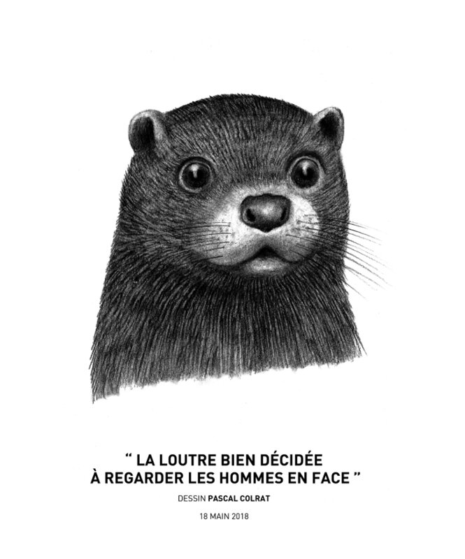 __la_loutre_bien_de_cide_e__a__regarder_les_hommes_en_face__