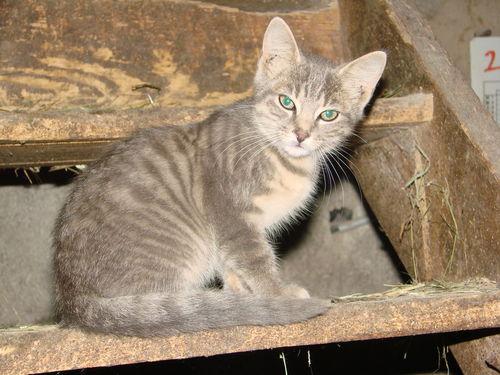 2008 08 15 Le petit chaton