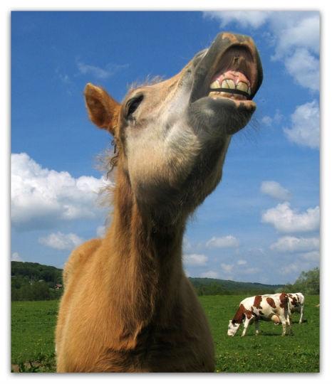 photo cheval qui hennit