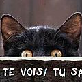 Les p'tit chat et chaton rigolo