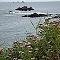 Randonnée à Plougasnou (Finistère) le 18 août 2018 (2)
