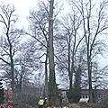2006 : Démontage du chêne à coté des frênes démontés en 2013