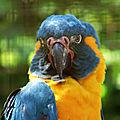 ♥ le parc des oiseaux à villars-les-dombes (3) ♥