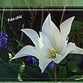 balanicole_2017_05_le printemps des tulipes_50_très chic
