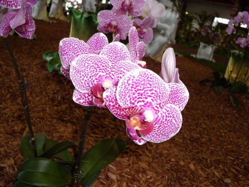 Floralies 141