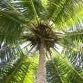 L'huile de palme vous dit ses 4 vérités