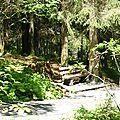 forestier