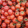 tomates rondes