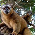 Madagascar tourisme