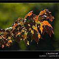 Windows-Live-Writer/214038d80325_13DA0/IMG_8787-naturelimages