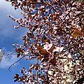 Le <b>printemps</b> c'est quoi, c'est comment ?