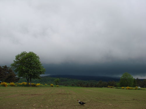 2008 06 03 Le Lizieux sous d'abondante précipitation je suppose