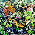 Feuillages d'automne (2)