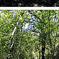 Chemins des bois