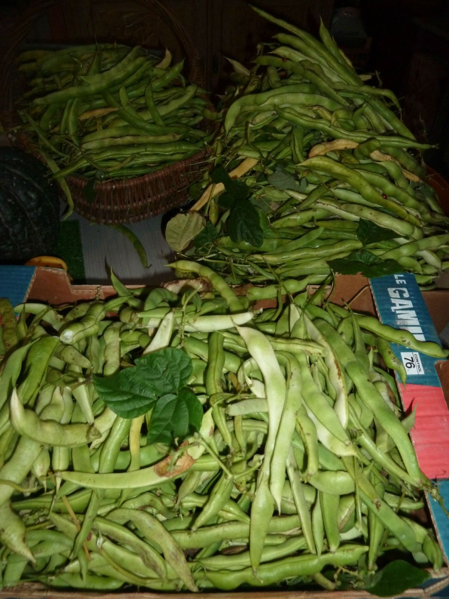 haricots phénomène - www.passionpotager.canalblog.com