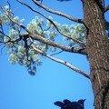 Australie Faune Flore Paysages - janvier 2005 (37)
