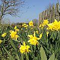 18 mars 2016...on se croirait au printemps !!!!!