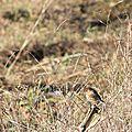 oiseau-loire14-04