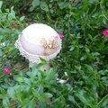 Avec l'automne une envie de champignons