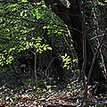 La Forêt magique (1281)
