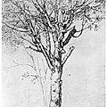 Symbolique de l'arbre selon Georges Romey