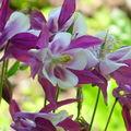 Fleur du jardin de l'Alhambra de Grenade