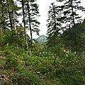 Les montagnes d'Arette à travers sa forêt...