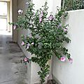<b>Guerilla</b> gardening naturelle !