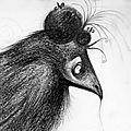 zzom corbeau