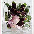 Feuilles de menthe et pétales de rose cristallisées.......et chocolatées...