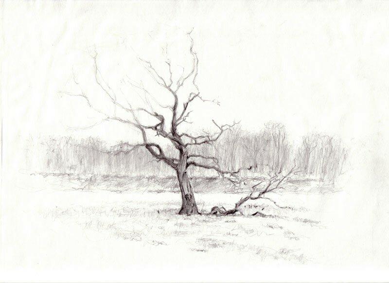L'arbre aux corbeaux (Chêne), Bois-Guillaume, janvier 2003 matin (inachevé cause pluie).