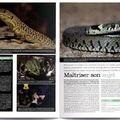 Grenouille verte (Page gauche, centre) - Magazine Declic Photo,