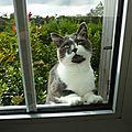 Arrête de saloper mes vitres , gustaf !