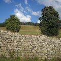 2009 08 27 Un mur, des arbres et un ciel voilé