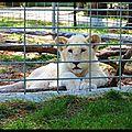 Série animalière : le lionceau blanc / the white lion