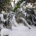 Les palmiers essaient leur nouveau manteau