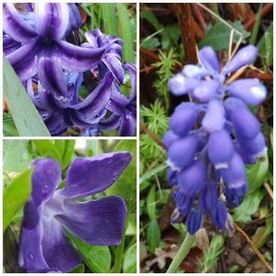 Jardin avril (5)