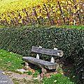 Banc en bois dans le Vignoble du Rangen de Thann