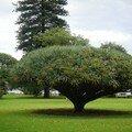 Australie Faune Flore Paysages - janvier 2005 (4)