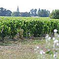 vigne du Haut-Médoc