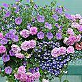 (suite) fleurir son balcon avec les collections petits prix [jardin express]