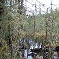 Notre forêt... au chalet