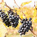 032 Les vignes de Jongieux