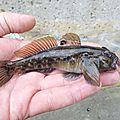 Sortie rockfishing