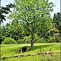 48-montcuq - st maurice de ventalon