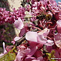 Fond fleuri, fond d'abeille