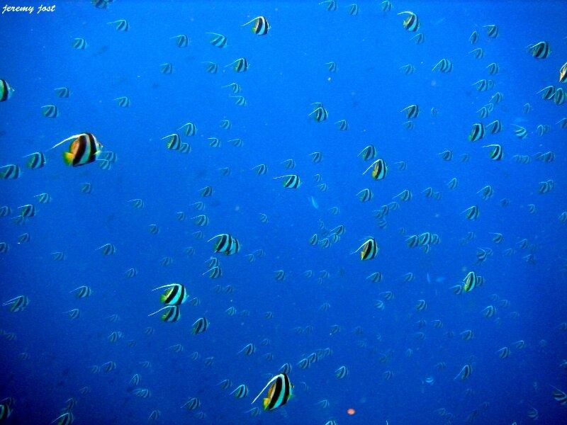 poissons dans le grand bleu
